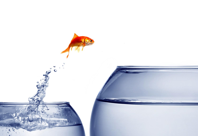 fish jumping out of bowl to a bigger bowl